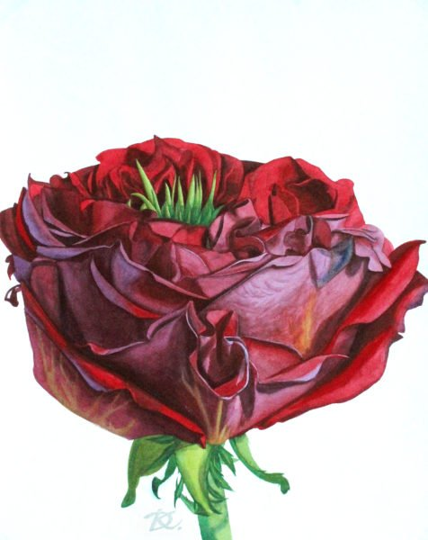 The Scarlet Flower Daria Kirichenko. Graphics & art