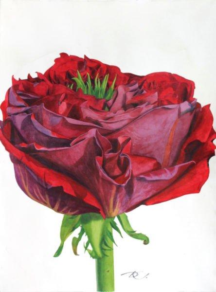 Scarlet flower Daria Kirichenko. Graphics & art
